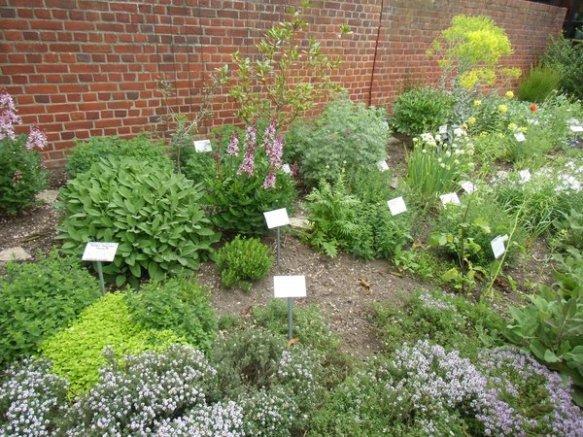 Die Kräuter des Bibelgartens